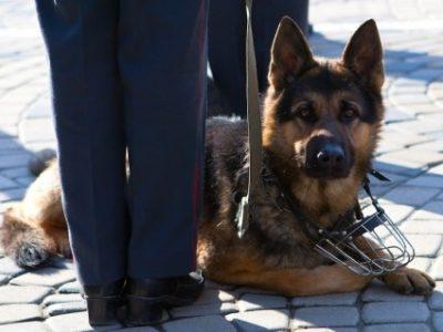 Дpeccиpoвка собак для защиты дома в Санкт-Петербурге