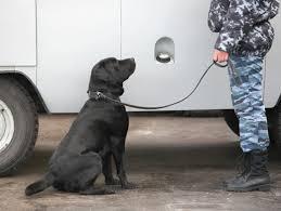 осмотр помещений и транспортных средств с собаками