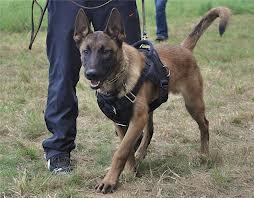 охрана местности с собакой
