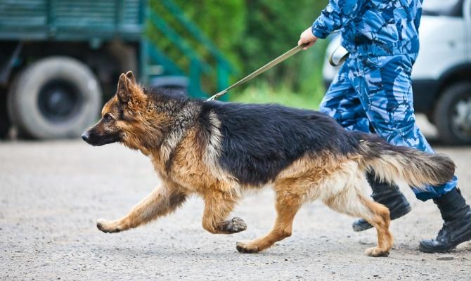 охрана с собаками - потрулирование
