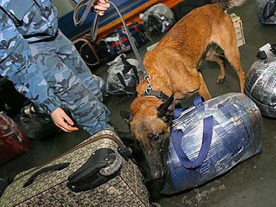 распознование опасных веществ собаками