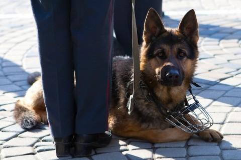 служебные собаки - охрана с собаками